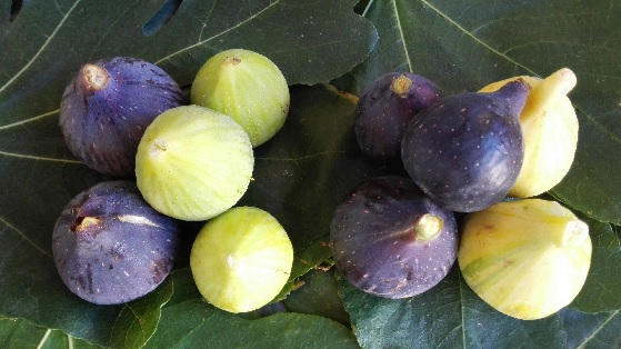 foto figues